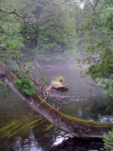 Early Morning Fog on the Au Sable