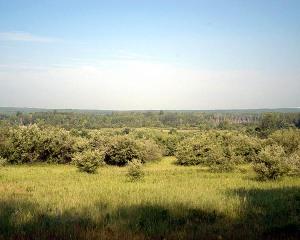 Jones field